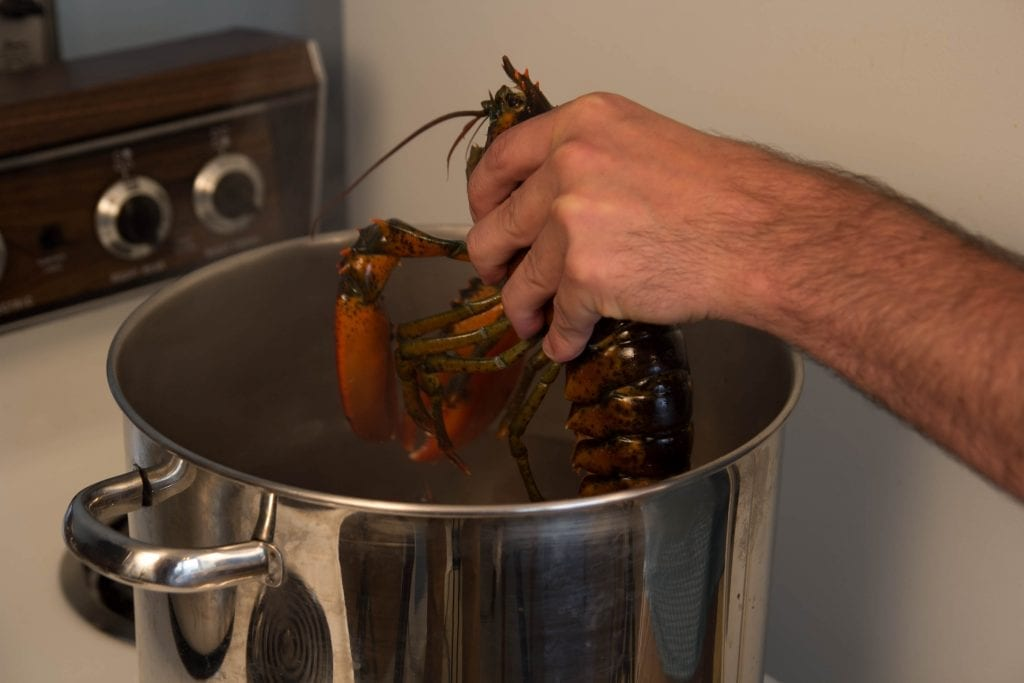 Live Lobster Being put into pot