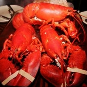 MAINE LOBSTER DINNER FOR 4