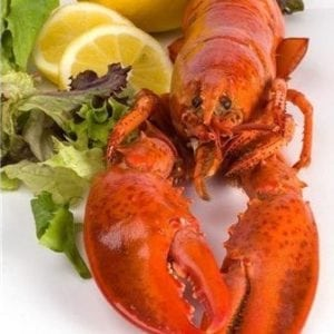 1 and 1/2 lb Maine Lobsters Pack of 4