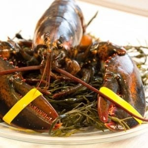 1 and 1/2 lb Maine Lobsters Pack of 10