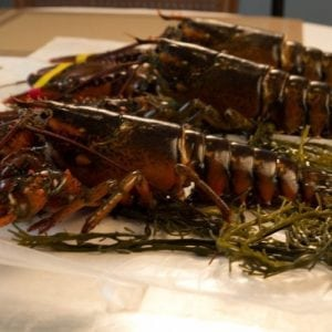 1 and 1/2 lb. Maine Lobster