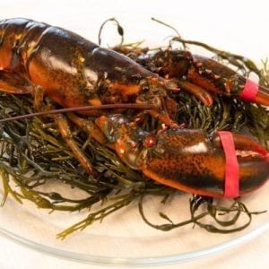 1 and 1/8 lb Maine Lobsters Pack of 6