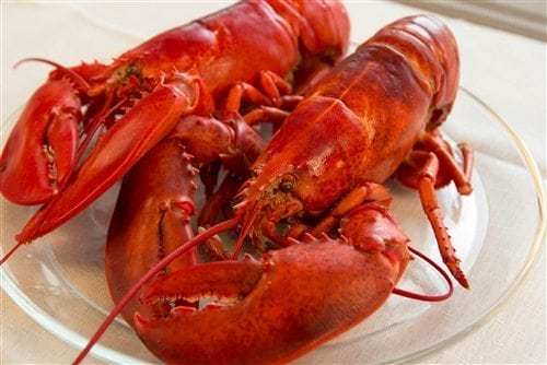 1 and 1/2 lb Maine Lobsters Pack of 12