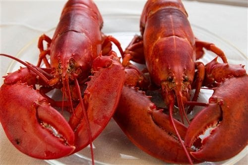 1 and 1/2 lb Maine Lobsters Pack of 5