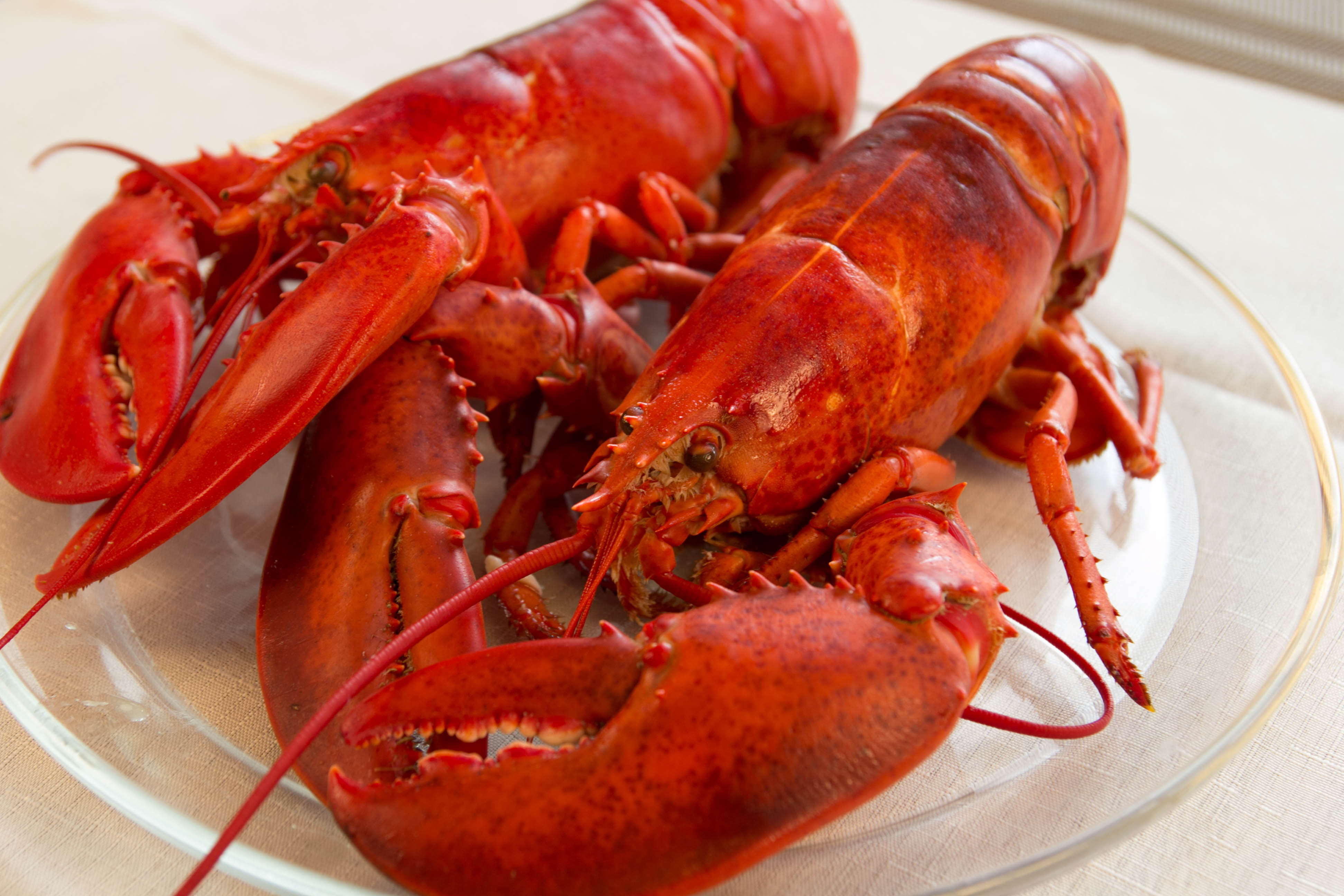 Buy Live Maine Lobster & Fresh Seafood Online   Cape