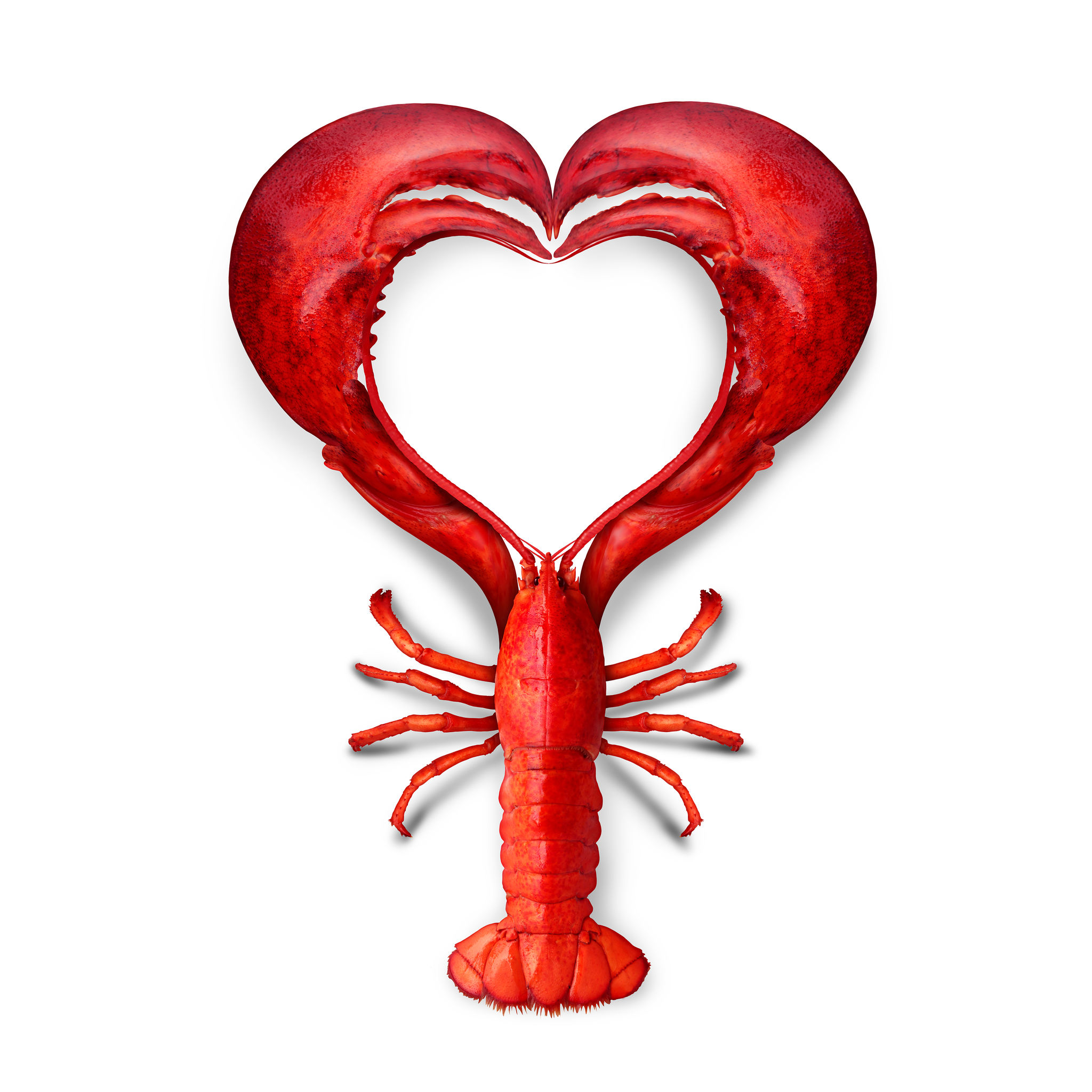 Why Lobsters Are an Aphrodisiac