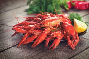 WARM-WATER VS. COLD-WATER LOBSTER